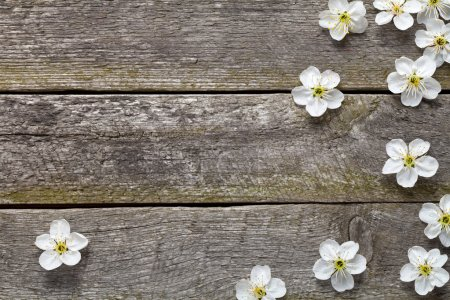 Photo for Spring flowers on wooden table. Cherry blossom. Top view - Royalty Free Image