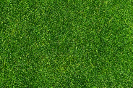 Photo for Close up on natural lawn texture - Royalty Free Image