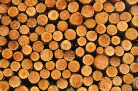 Photo pour Bûches de bois fraîchement coupées et empilées - abstrait en bois - image libre de droit