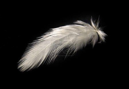 Photo pour Plume blanche isolée sur noir . - image libre de droit