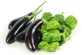 Zelené papriky a fialový lilek