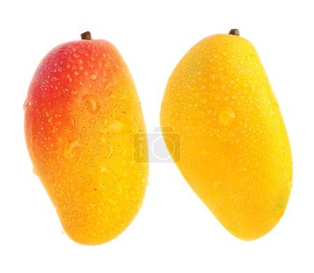 Exotic mangos