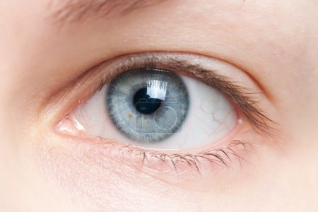Photo for Close-up of human blue eye - Royalty Free Image