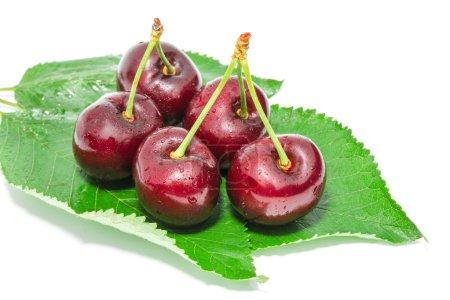 Big ripe dark cherry sweet juicy berries with water droplets