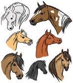 Horse Portrait Collection