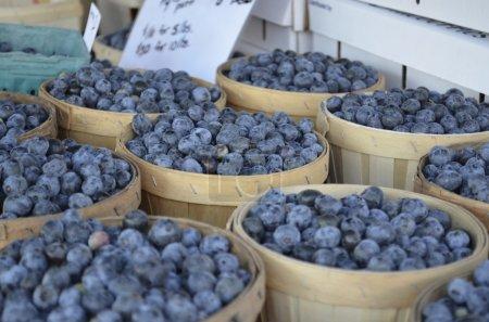 Fresh Michigan Blueberries