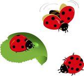 A set of cute cartoon ladybugs