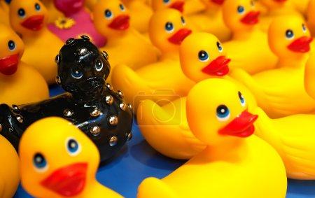 Photo pour Un canard en caoutchouc de bain noir cloutés se distingue contre la foule des canards en caoutchouc jaune sur fond bleu. - image libre de droit