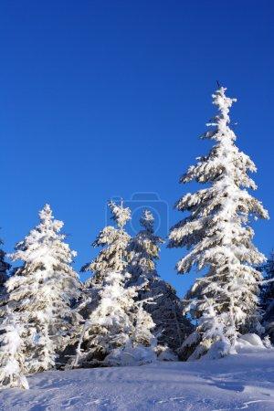 Photo pour Arbre de Noël dans la neige. - image libre de droit