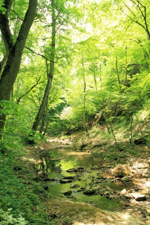Photo pour Forêt d'automne avec brouillard - image libre de droit