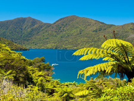 Tree ferns and blue water