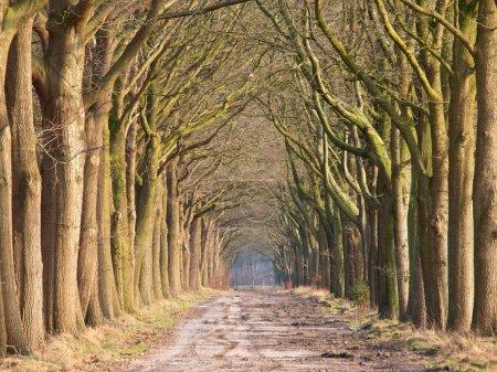Old oak tree alley