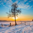 Lonely Tree in Winter Landscape with Snowy Fields ...