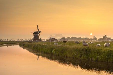 Photo pour Paysage hollandais avec moutons et vieux moulin à vent pendant le coucher du soleil - image libre de droit