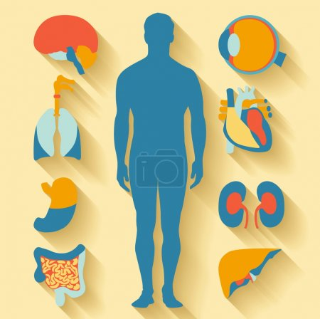 Illustration for Flat design icons for medical theme. Human anatomy, huge collection of human organs - Royalty Free Image