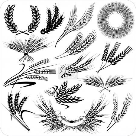 Illustration for Wheat ears collection for all design - Royalty Free Image