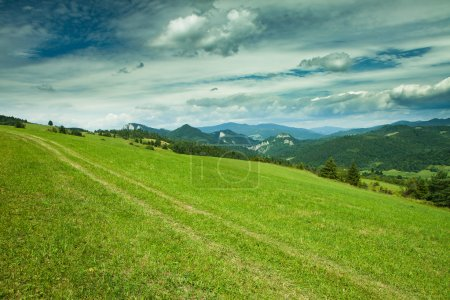 Photo for Beautifull view to Slovak landscape, mountains and forest in Pieniny national park - Royalty Free Image