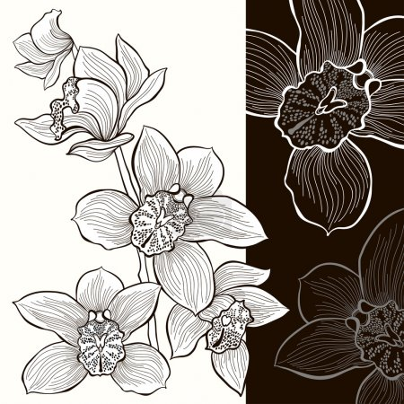 Illustration for Vector design.Monochrome vector illustration with an orchid - Royalty Free Image