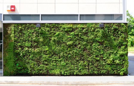Photo for Green wall building in the city - Royalty Free Image
