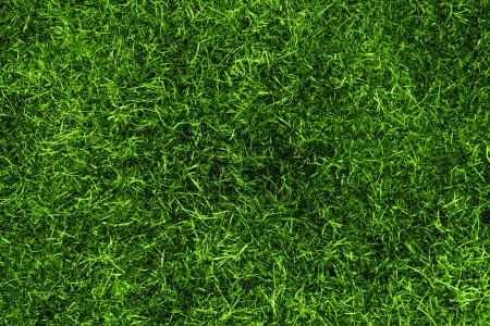 Photo for A grass texture in green from above - Royalty Free Image