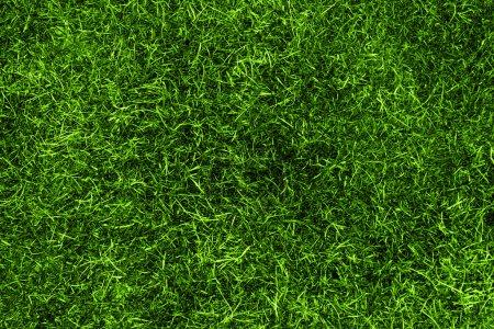Photo pour Une texture d'herbe en vert d'en haut - image libre de droit