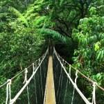 Adventurous crossing rope bridge in the rain fores...