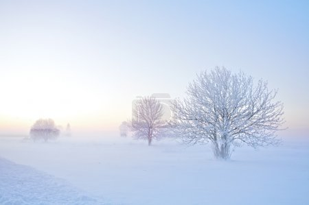 Photo for Landscape of frosty trees on foggy background of winter sunset - Royalty Free Image