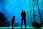 Silhouettes in aquarium background