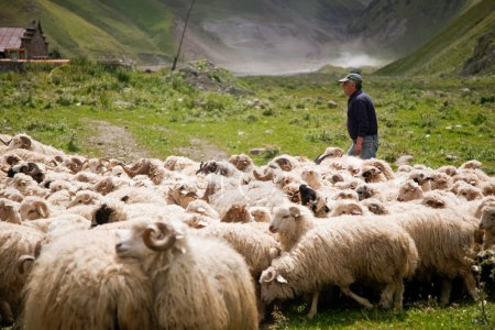 Shepherd and flock of sheep