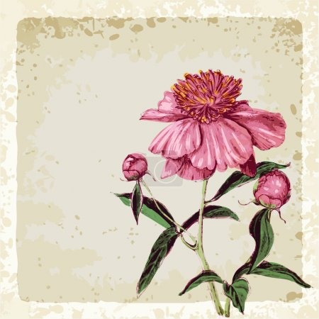Illustration for Greeting cart with peony flower, vector illustration, eps10 - Royalty Free Image