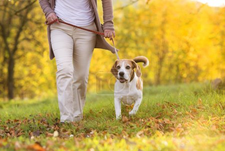 Photo for Senior woman walking her beagle dog in countryside - Royalty Free Image