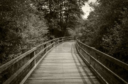 Along forest trail is a wooden foot bridge