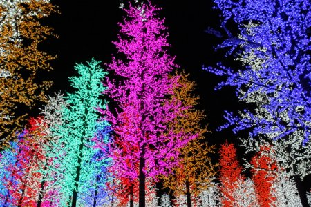 Photo for The place comes alive with an amazing forest of man-made trees brightly illuminated with millions of colourful LED lights - Royalty Free Image
