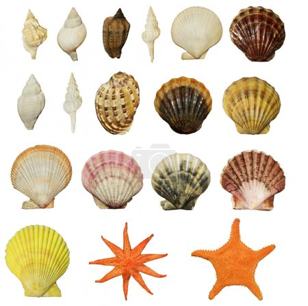set of beautiful shells of molluscs