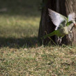 A parrot fly in the nature...