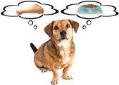 Malá psí dieta