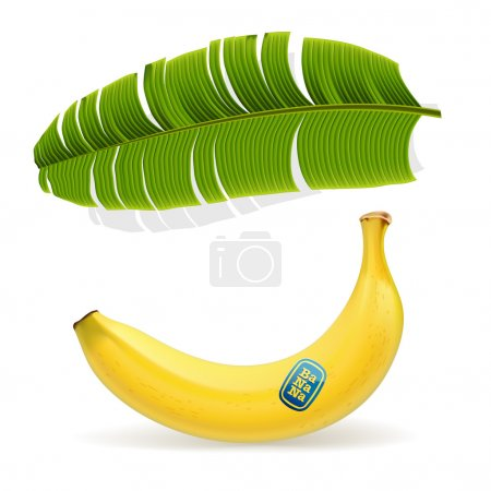 Illustration for Vector. Ripe yellow banana under palm leaf - Royalty Free Image