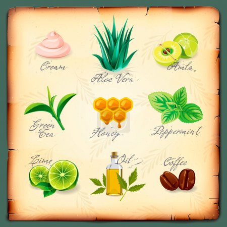 Photo for Set of natural cosmetics ingredients, vector Eps10 image. - Royalty Free Image