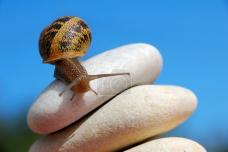 snail on a pile of pebbles