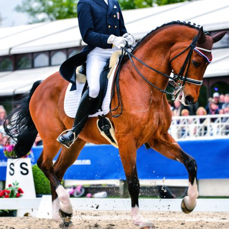 dressage horse and rider - collected trot