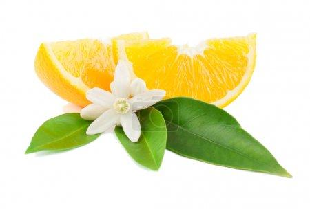 Photo pour Orange avec une fleur et feuilles isolés sur fond blanc. - image libre de droit