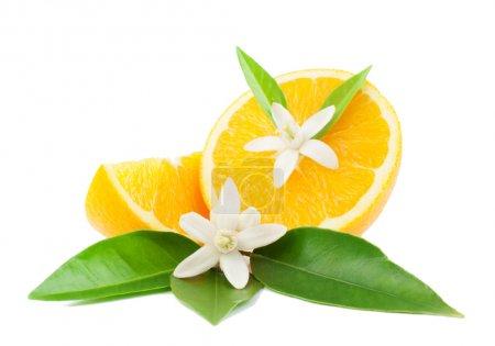 Photo pour Orange, feuilles, fleurs et tranche. isolé sur fond blanc. - image libre de droit