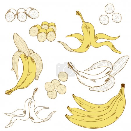 Illustration for Set of colored and hand drawn bananas on the white background. Isolated icon. - Royalty Free Image
