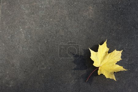 Photo for Yellow leaf on the ground - Royalty Free Image