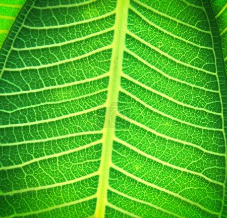 Photo pour Processus de texture des feuilles dans un style vintage - image libre de droit