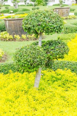 Photo pour Plante verte - image libre de droit