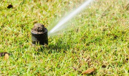Sprinkle on green grass