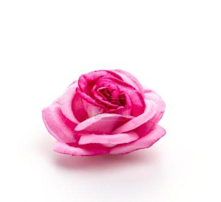 Photo pour Rose rose isolé sur fond blanc - image libre de droit