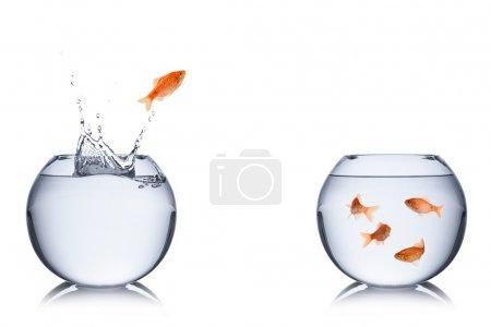 Photo pour Poisson saute hors de bol dans un autre. - image libre de droit