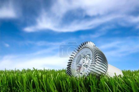 Photo pour Taureau mené sur l'herbe devant le ciel bleu - image libre de droit